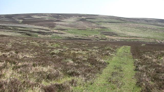 Moorland, Wester Burn