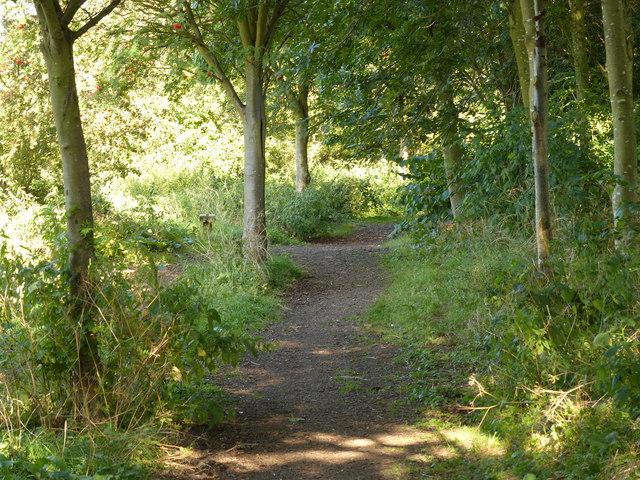 Wooded path across Riverside Park
