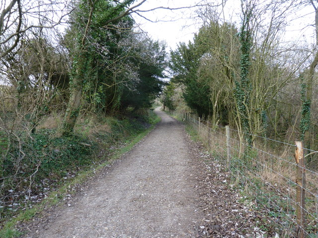 Bridleway bordering Kingley Vale Reserve