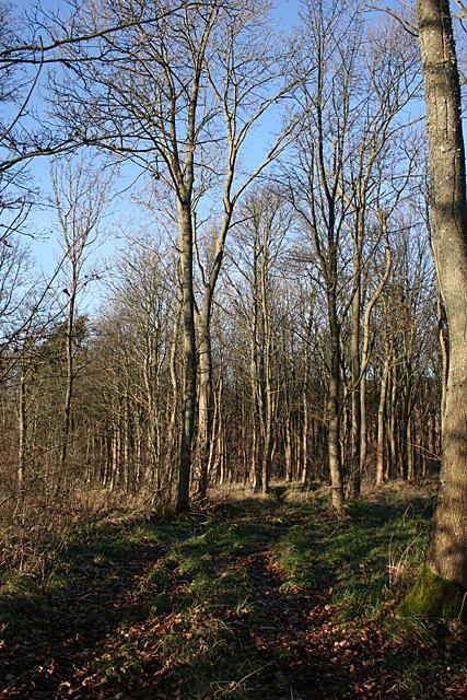 Woodland Track