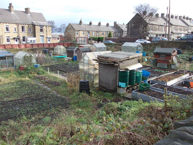 Allotments - Deighton Lane