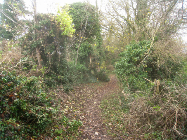 Overgrown footpath/byway