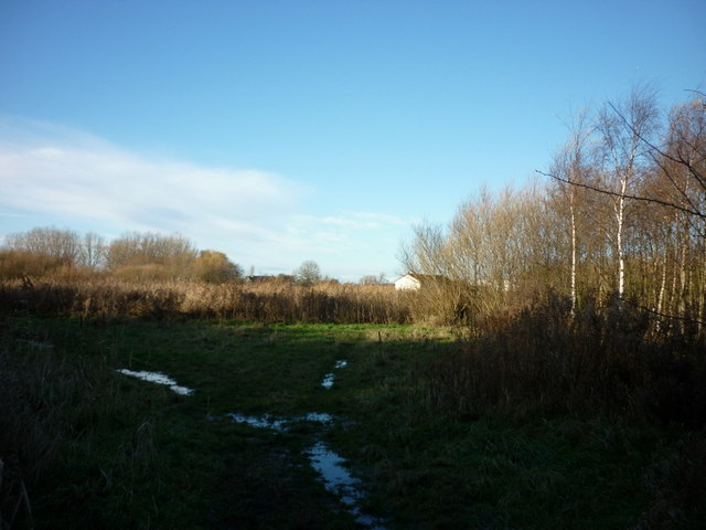 A small wood near Oak Road playing fields