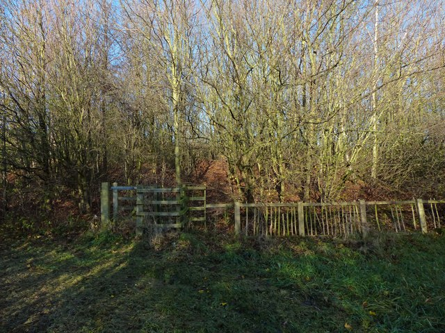 Fence and woodland at the Osiers Nature Area
