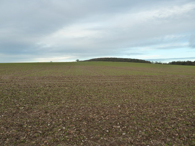 Farm land on the lower slope of Walderton Down