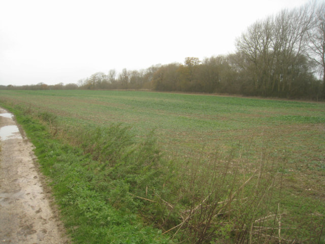 Fields west of Rookery Farm