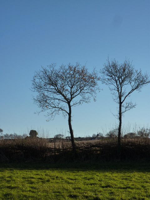 Trees with windmill, Cat and Fiddle