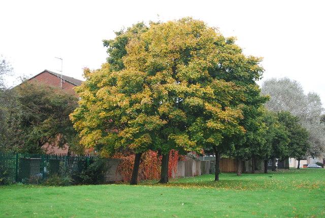Trees, Durants Park