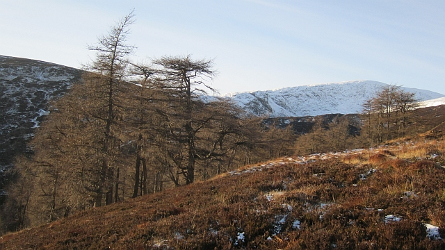 Larch woods, Bacnagairn
