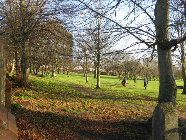 Trees at the north end of Buckingham Park