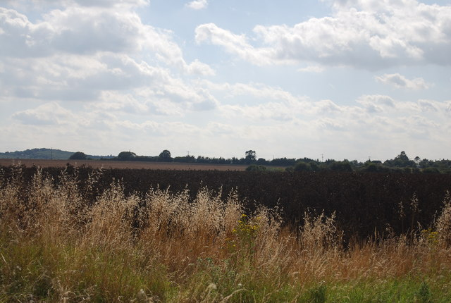 Crops near South Fambridge Hall