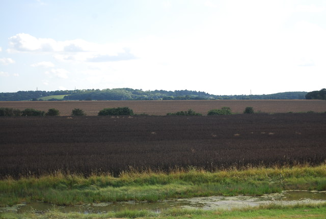 Crops near South Fambridge