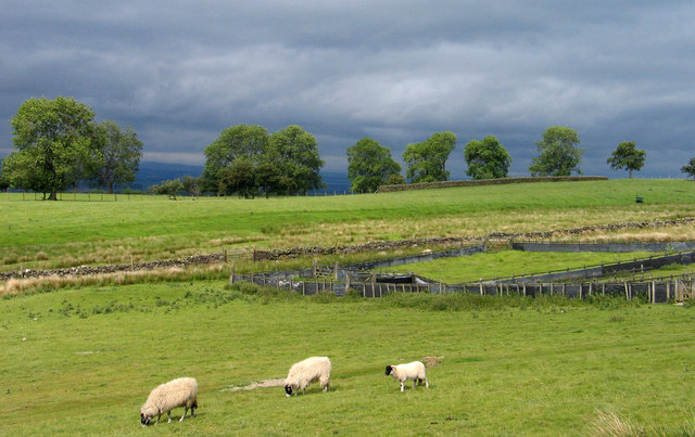 Sheepfold near Murton