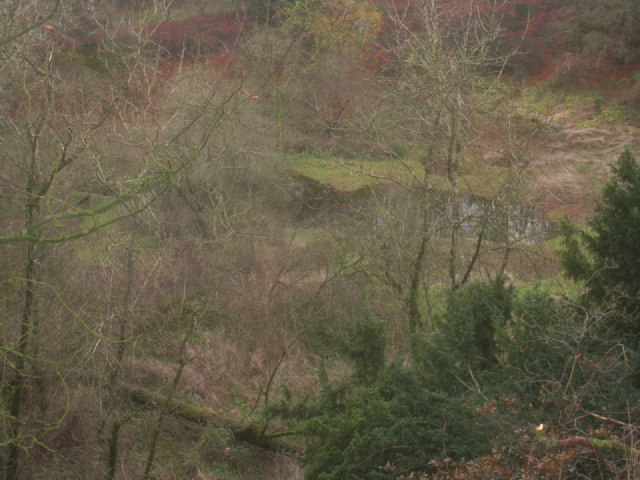 Pond in the chalk pit