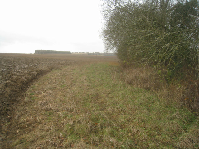 Southern edge of chalk pit