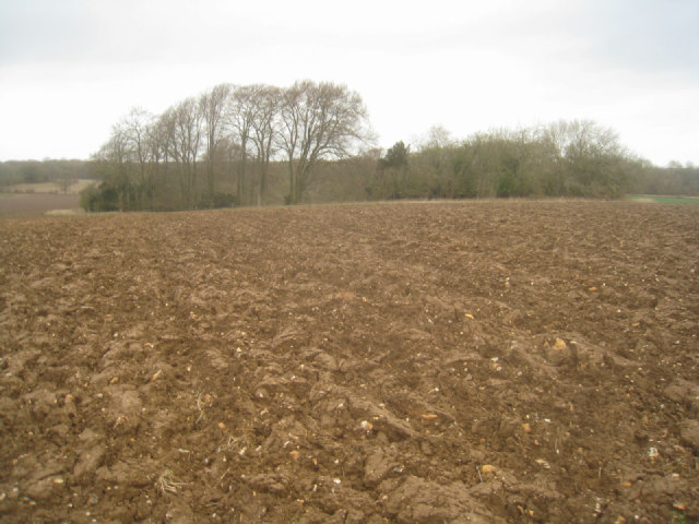 Wooded chalk pit in Hampshire Downs
