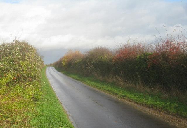 Sunlit lane towards A339