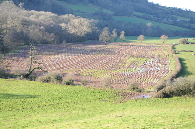 Potato crop in the Monnow valley