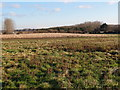 TL1788 : Denton Common by Michael Trolove