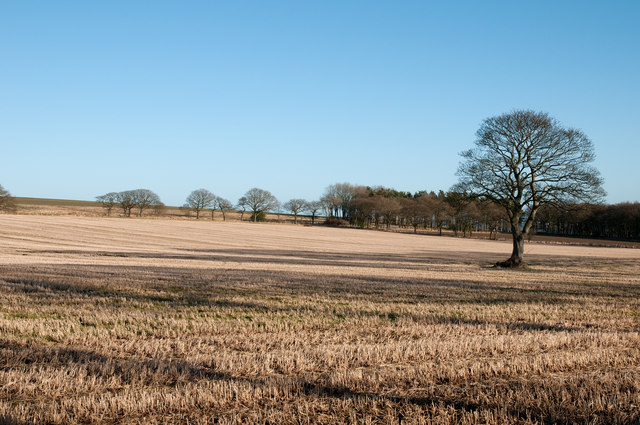 High Gladdow Wood across stubble field