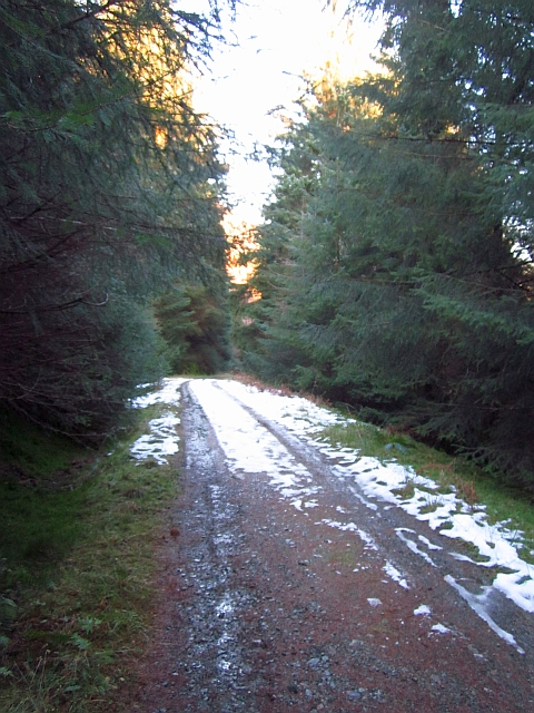 Logging road above Stank