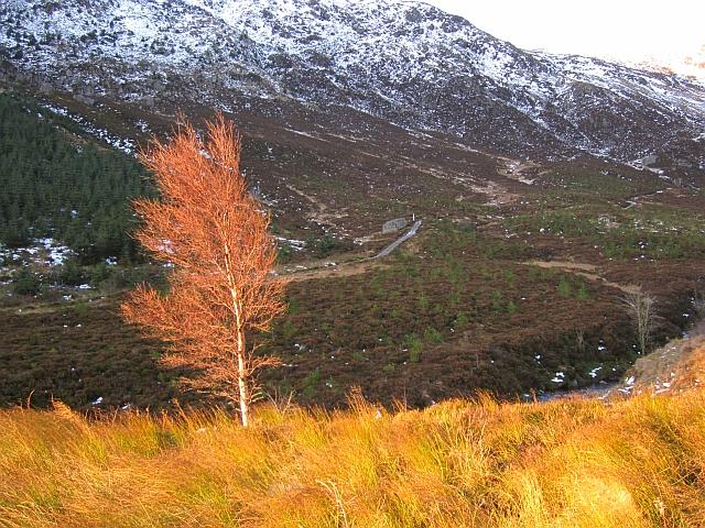 Birch, Stank Glen
