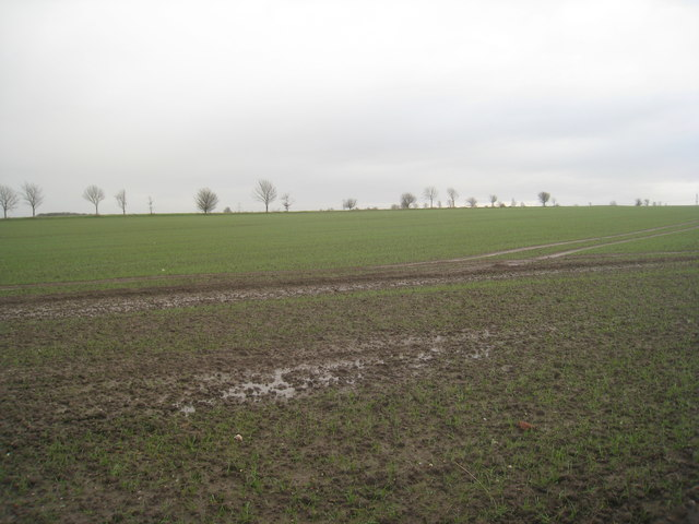Bleak landscape
