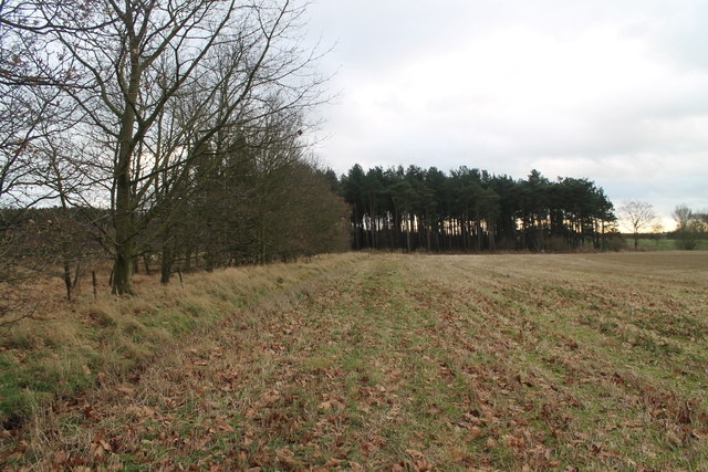 Edge of Cop Hills Wood
