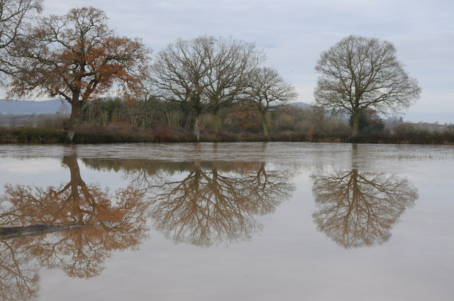 Trees reflected in floodwater