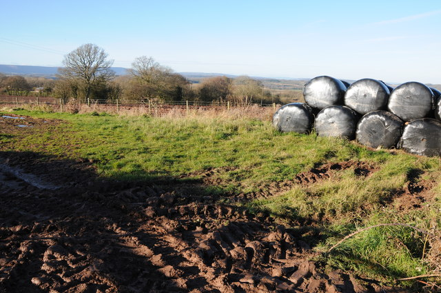 Silage bales at Cross Llyde
