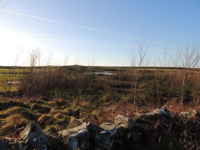 Pond near Challochmunn