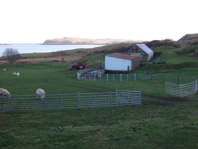 Croft buildings and sheep at Dunans