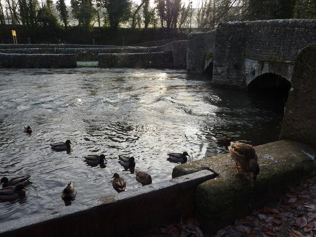 Wye ducks, 12.12, 12.12.12