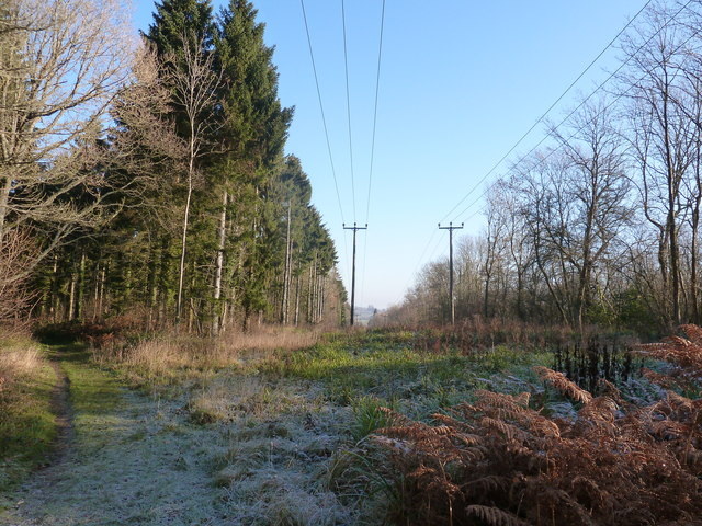 Power lines through Minepit Wood