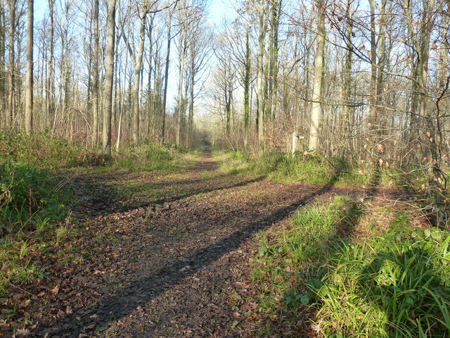 Track junction in Minepit Wood