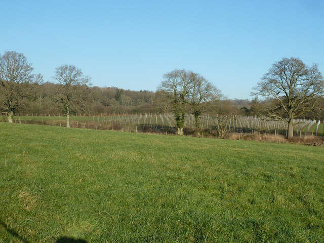 Vineyard south of Mary Wood