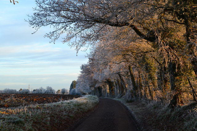 Frosty lane, Stoke by Nayland