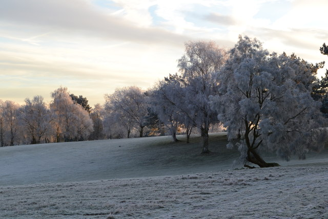 Trees in frost, Stoke by Nayland Golf Club