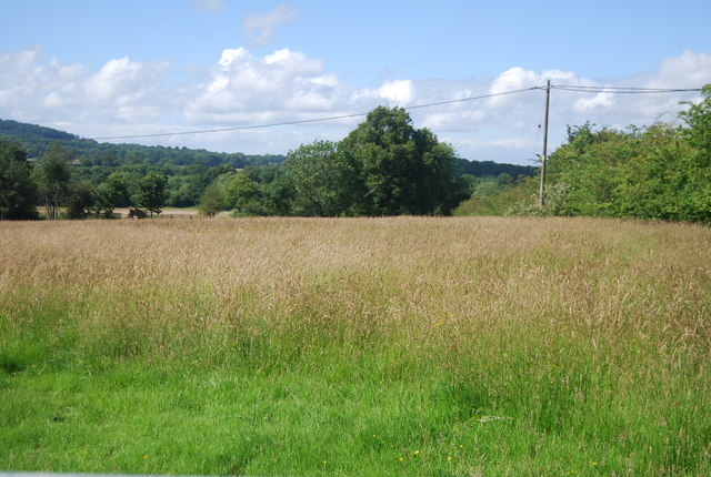 Grassland, Hall Place