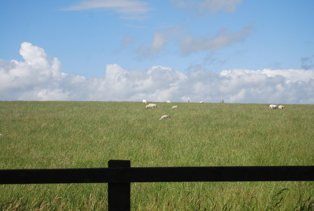 Sheep grazing, Mill Farm