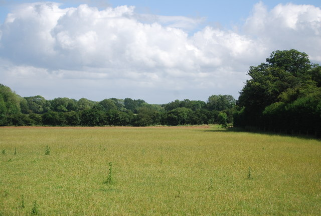 Pasture, Mill Farm