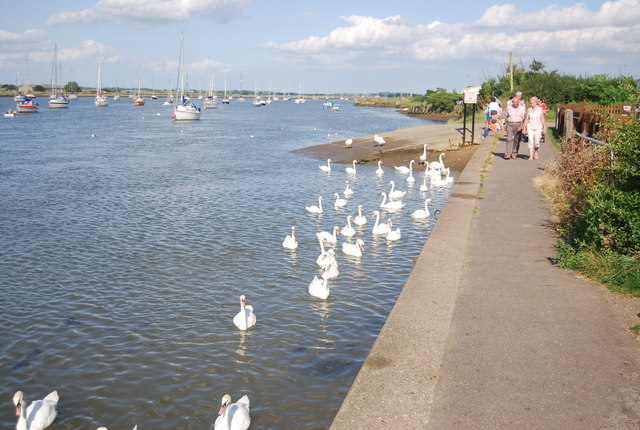 Swans, River Crouch