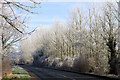 SP9313 : Poplars by the road from Tring to Bulbourne by Chris Reynolds