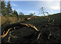 SO3488 : Dead tree near Oakeley Wood by Dave Croker