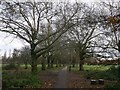 TQ2773 : Path and trees, Wandsworth Common by David Anstiss