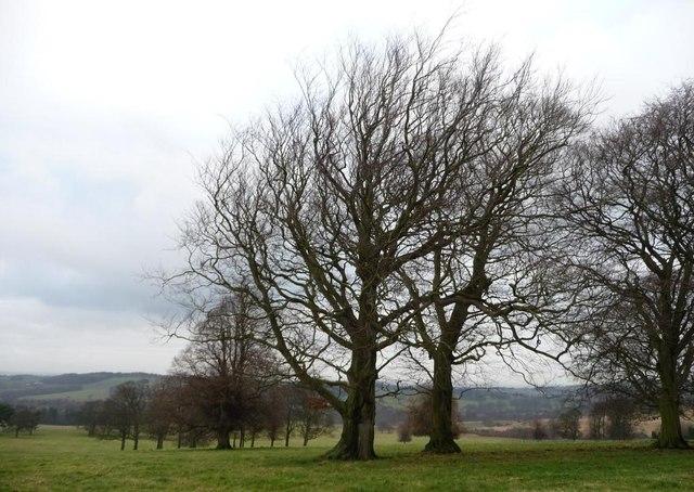 A pair of winter trees near Jebb Lane