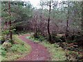 NT2439 : Zigzag path in Cademuir Forest by Jim Barton