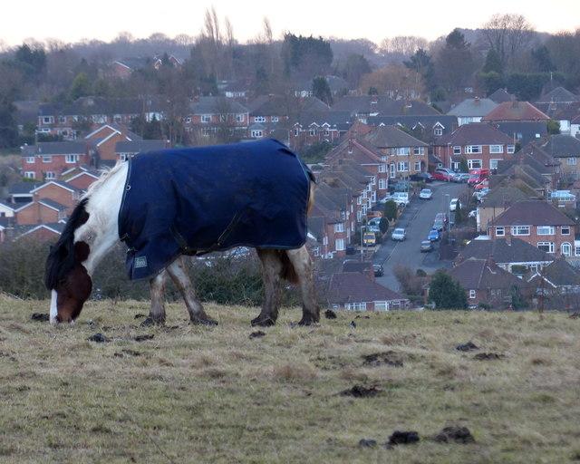 Horse near Covert Lane
