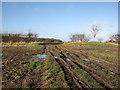 TL6255 : Rutted track near Brinkley Road by John Sutton