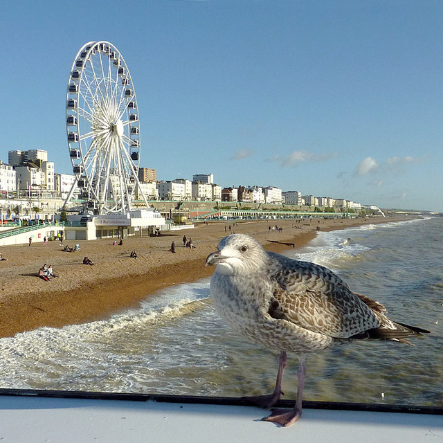 Brighton beach and seafront, with gull and wheel